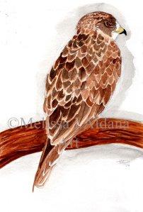 Original Watercolor Hawk1