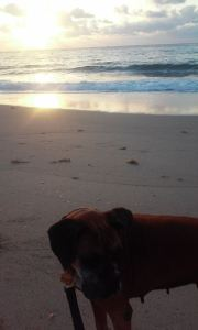 Me and the Dog at the Beach at Sunrise in Florida